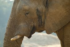 Free Close-up Shot Of An Elephant S Face Stock Photos - 20854863