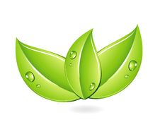 Free Nature Single Energy Leafs Green Color Royalty Free Stock Photography - 20857307