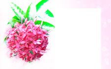 Free Pink Flowers Stock Images - 20857374
