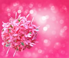 Free Pink Flowers Royalty Free Stock Photos - 20857378