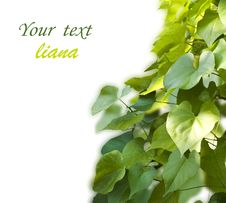 Free Background From The Leaves Royalty Free Stock Photography - 20858087