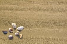 Free From Sand With Cockleshells Stock Images - 20858124