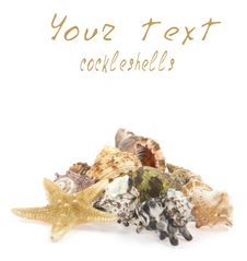 Free Cockleshells And Starfish Royalty Free Stock Photos - 20858198