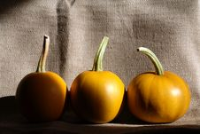 Free Pumpkins On Canvas Stock Photo - 20858220