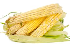Free Ear Of Corn Stock Image - 20858981