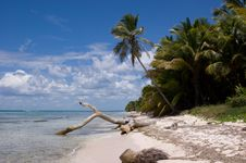 Saona Beach Royalty Free Stock Photography