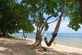 Free Hamock On Beach ,Samui Island,Thailand Stock Images - 20867914