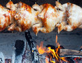 Free Chicken-grilled. Stock Photos - 20868123