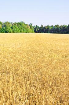 Free Harvest Stock Image - 20860291