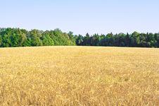 Free Harvest Royalty Free Stock Image - 20860336