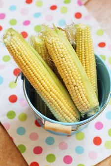 Free Sweetcorn In A Bucket Royalty Free Stock Images - 20860939