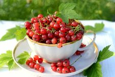 Free Redcurrant Royalty Free Stock Photography - 20861207