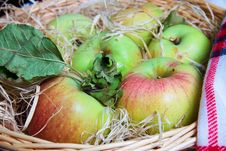 Harvest Of Aplles Royalty Free Stock Photo