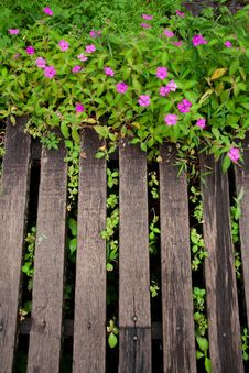 Free Wood Planks With Flowers In Garden Stock Photos - 20862783