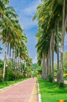Free Tropical Road Stock Image - 20863331