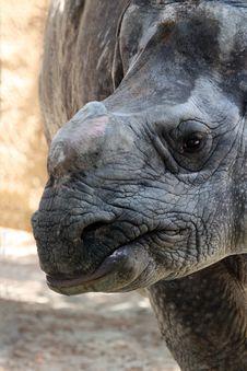 Free Rhinoceros Royalty Free Stock Photography - 20863387