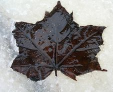 Leaf On Ice Stock Photography