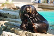 Free Seal Sits Stock Image - 20865011