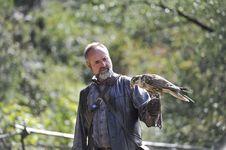 Free Falcon,falco Cherrug . Stock Images - 20865184