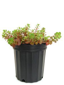 Free A Houseplant Royalty Free Stock Photos - 20865208