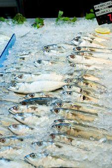 Free Faughni Mackerel Kambong Royalty Free Stock Photos - 20866728
