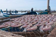 Free Making Dried Fish  By The Beach Stock Photo - 20868180