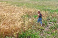 Free Boy On A Field Of Wheat Royalty Free Stock Photos - 20868408