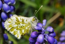 Free Butterfly Sitting On Flower Royalty Free Stock Photo - 20869045