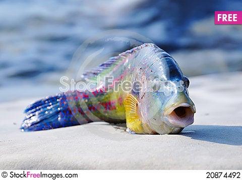 Free Green-fish Stock Photography - 20874492