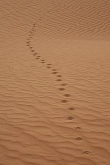 Free Wild Animal Trail In A Desert Royalty Free Stock Image - 20870276