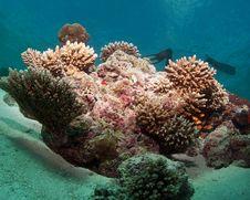 Free Diving Maldives Stock Photography - 20871012