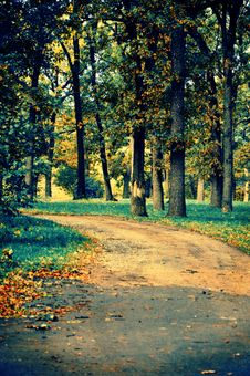 Free Magic Road In The Autumn Park Royalty Free Stock Images - 20873629