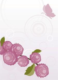 Free Pink Background Stock Image - 20874461