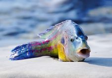 Free Green-fish Stock Photography - 20874492