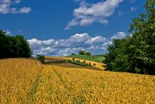 Free Beautiful Golden Grain Field In Summer Royalty Free Stock Image - 20875006