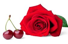 Free Two Sweet Cherries And Rose Royalty Free Stock Photos - 20875138