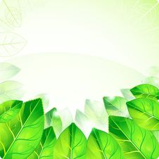 Free Fresh Green Leaves With Drops And The Glare Of. Ep Stock Image - 20875941