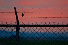 Bird On A Wire Fence Royalty Free Stock Photo