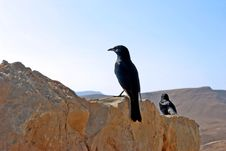 Black Bird On A Background Of  Deserted Mountains Stock Photo