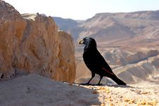 Free Black Bird  On A Background Of Deserted Mountains Stock Image - 20877901