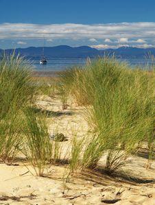 Free Grass On The Beach Stock Photos - 20878113