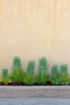 Free Background Wall With Plants Stock Image - 20878681