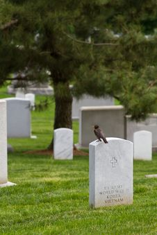 Free Military Cemetery Homage Royalty Free Stock Photo - 20879525