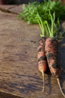 Fresh Havested Carrots Stock Photography