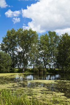 Free Trees Near Water Stock Photos - 20880113
