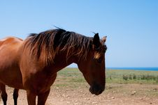 Free Chestnut Horse Grazing In A Meadow Stock Image - 20880831