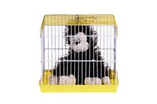 Free Monkey In The Golden Cage Stock Photo - 20880900