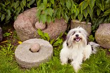 Free Original Old Stones And Dog Stock Photo - 20881220