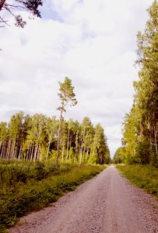 Free Road In The Forest Stock Photography - 20881222