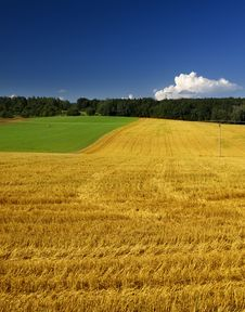 Free Green And Yellow Field Royalty Free Stock Photography - 20882437
